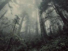 חדר בריחה הבקתה ביער