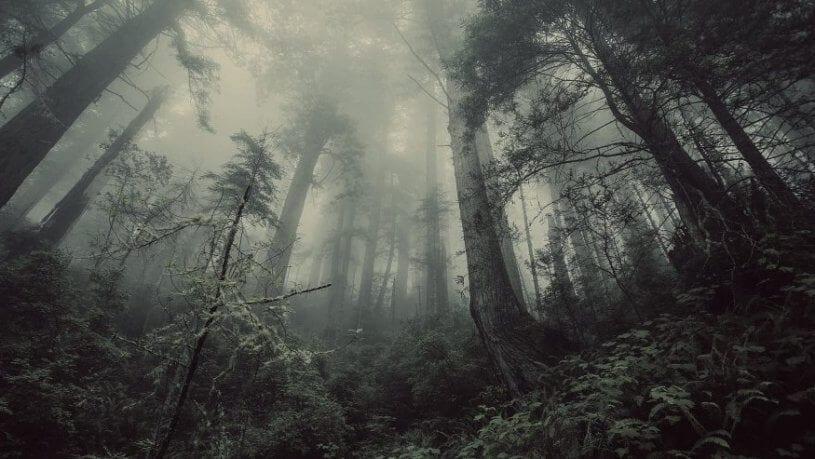 חדר בריחה הבקתה ביער 0